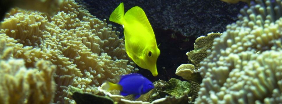 Bunte Fische im Aquarium, © kiel-magazin.de